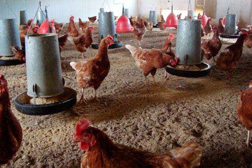 Granja de huevos ecológicos Rosalinda, Arrúbal