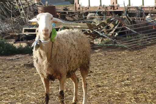 Agrovidar - Desarrollo Rural en La Rioja